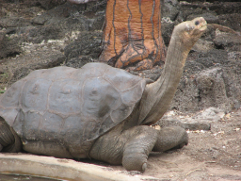 lonesomeGeorge.png